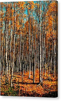Birch Canvas Print by Brigid Nelson