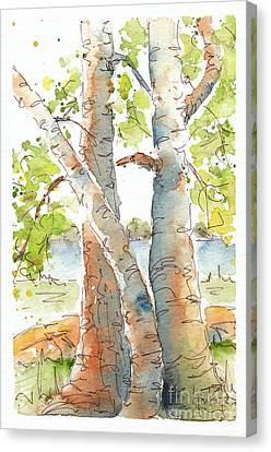 Birch Buddies Canvas Print by Pat Katz