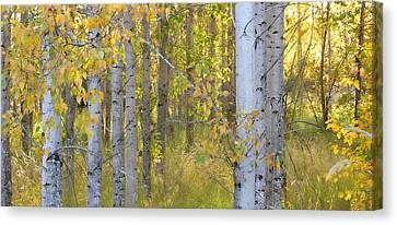 Birch Forest Canvas Print by Bonnie Bruno