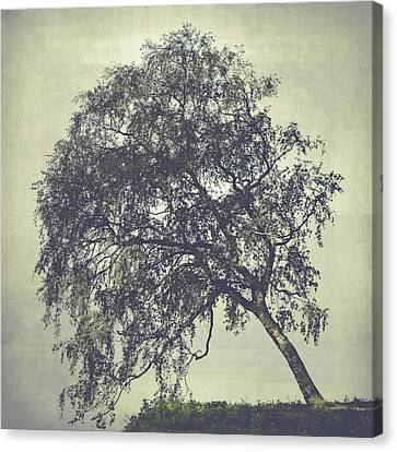 Canvas Print featuring the photograph Birch In The Mist by Ari Salmela