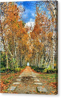 Birch Pathway Canvas Print by Kristin Elmquist