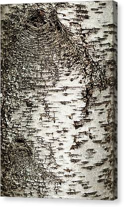 Canvas Print featuring the photograph Birch Tree Bark by Christina Rollo