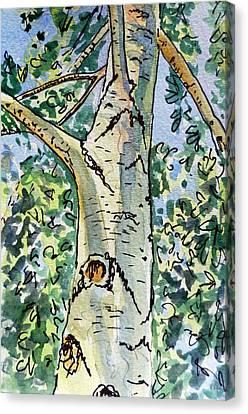 Birch Tree Sketchbook Project Down My Street Canvas Print by Irina Sztukowski