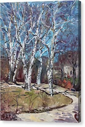 Birch Trees Next Door Canvas Print by Ylli Haruni