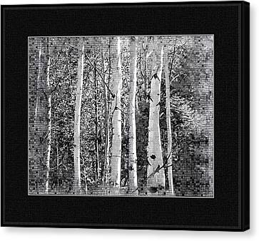Canvas Print featuring the photograph Birch Trees by Susan Kinney