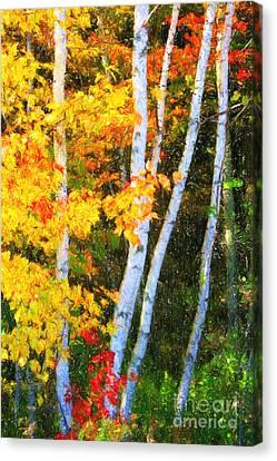 Birch Trees Canvas Print by Verena Matthew
