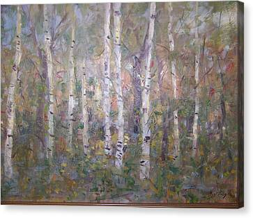 Birches. Canvas Print