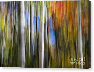 Birches In Autumn Forest Canvas Print