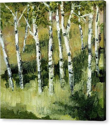 Birches On A Hill Canvas Print