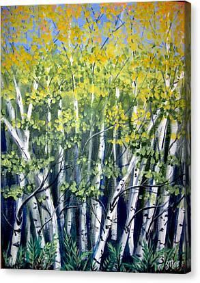 Birches Canvas Print by Sharon Marcella Marston