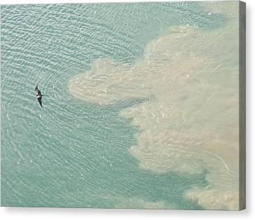 Bird And Churning Sand Canvas Print