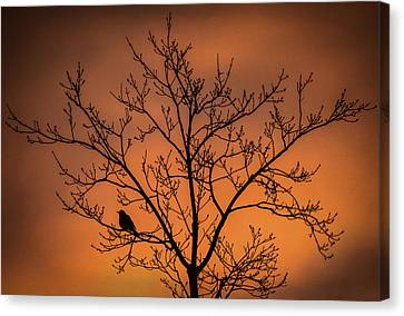 Bird And Tree Silhouette At Dusk Canvas Print by Terry DeLuco