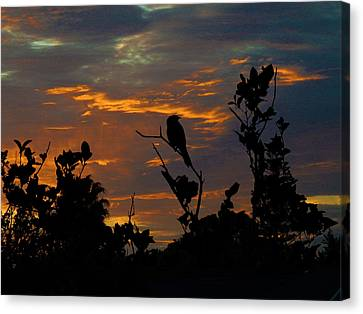 Bird At Sunset Canvas Print