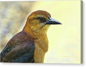 Canvas Print featuring the photograph Bird Beauty by Deborah Benoit