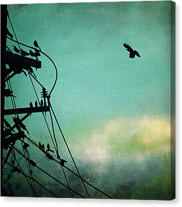 Canvas Print featuring the photograph Bird City Revisited by Trish Mistric