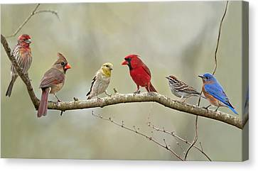 Cardinal Canvas Print - Bird Congregation by Bonnie Barry