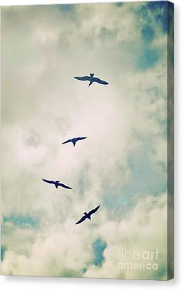 Canvas Print featuring the photograph Bird Dance by Lyn Randle