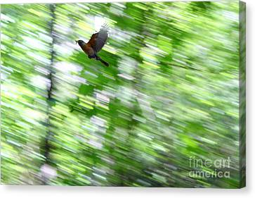 Bird Canvas Print by Farzali Babekhan