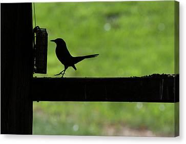 Bird Feeding In Silhouette Canvas Print by Dan Friend