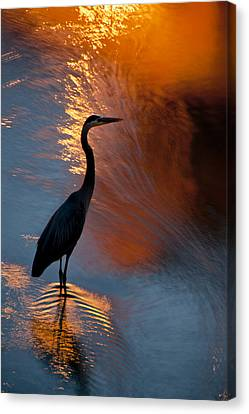 Bird Fishing At Sundown Canvas Print by Williams-Cairns Photography LLC