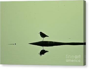 Bird In A Pond Canvas Print by Mario Brenes Simon