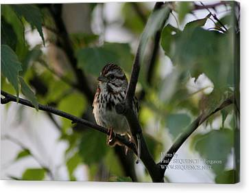 Bird In A Tree Canvas Print