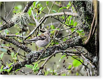 Bird In A Tree Posing Canvas Print by Tommytechno Sweden