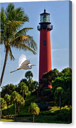 Bird In Flight Under Jupiter Lighthouse, Florida Canvas Print by Justin Kelefas