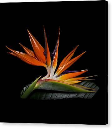 Florida Flowers Canvas Print - Bird In Paradise by Debra and Dave Vanderlaan