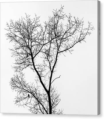 Bird In Tree Canvas Print by Wim Lanclus