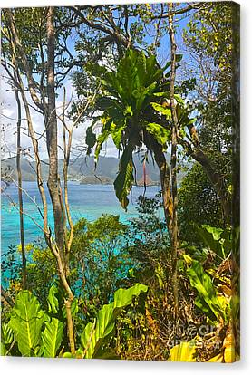 Bird Island Little Tobago  Canvas Print
