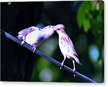 Bird Kiss Canvas Print by Bill Cannon