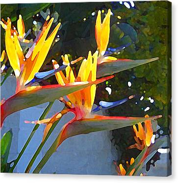 Bird Of Paradise Backlit By Sun Canvas Print by Amy Vangsgard