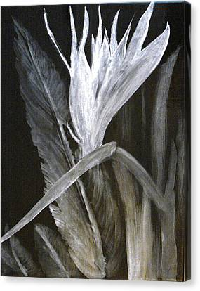 Bird Of Paradise Black And White Canvas Print by Rita Tortorelli