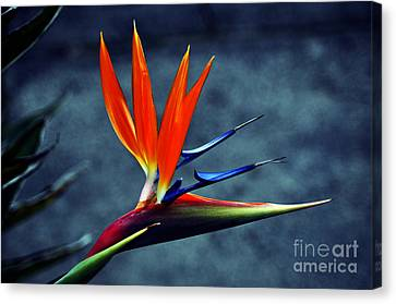 Bird Of Paradise Canvas Print by Clayton Bruster
