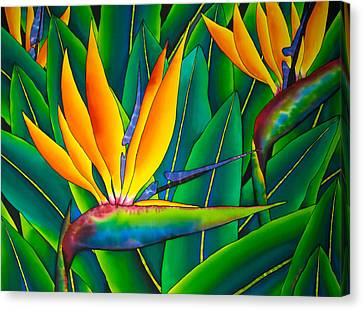 Bird Of Paradise Canvas Print by Daniel Jean-Baptiste