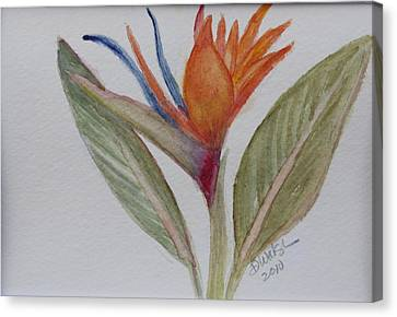 Canvas Print featuring the painting Bird Of Paradise by Donna Walsh