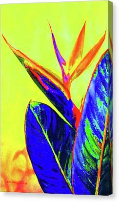 Bird Of Paradise Canvas Print by Estela Robles
