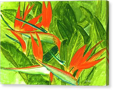 Bird Of Paradise Flower #55 Canvas Print by Donald k Hall