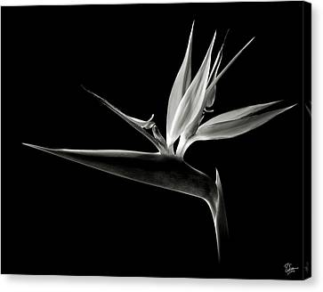 Bird Of Paradise In Black And White Canvas Print