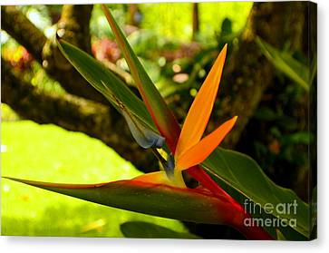 Canvas Print - Bird Of Paradise In Early Morning by Mary Deal