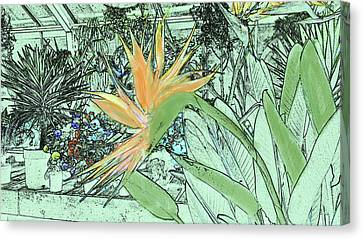 Canvas Print featuring the photograph Bird Of Paradise In The Hothouse by Nareeta Martin
