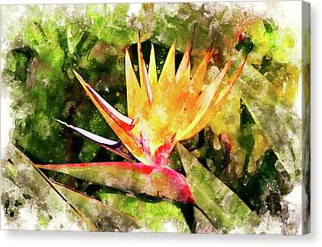 Bird Of Paradise Wc Canvas Print by Peter J Sucy