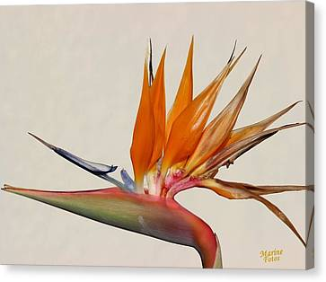 Bird Of Paradise With White Background Canvas Print