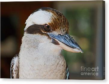 Bird Of Prey Canvas Print by A New Focus Photography