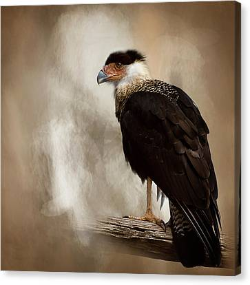 Bird Of Prey Canvas Print by Cyndy Doty