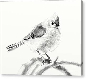 Canvas Print featuring the drawing Bird On A Branch by Eleonora Perlic