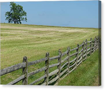 Bird On A Fence Canvas Print by Donald C Morgan