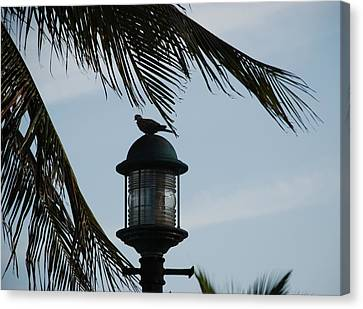 Bird On A Light Canvas Print by Rob Hans