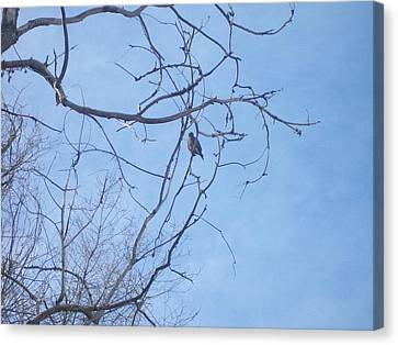 Canvas Print featuring the photograph Bird On A Limb by Jewel Hengen